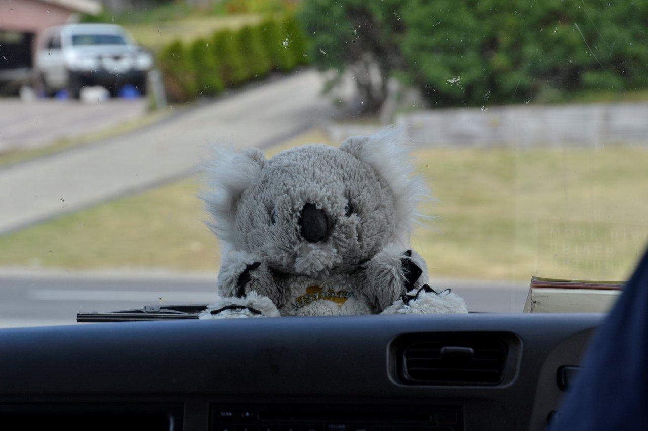 Koala Mascot
