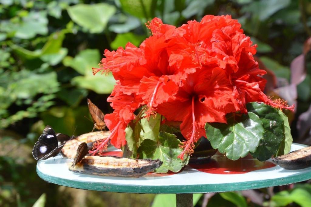 Butterfly Feeding Table