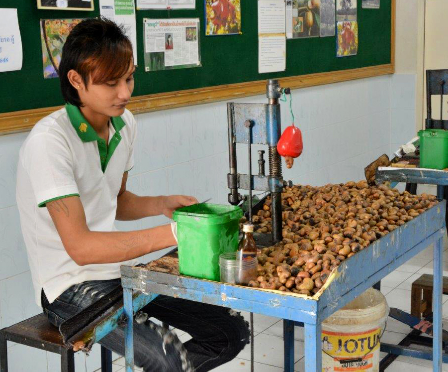 Shelling Cashews
