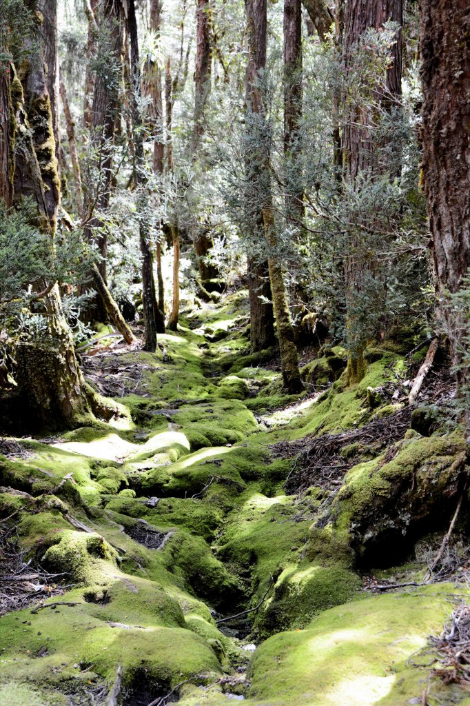 Mossy Area, Cradle Mountain, Tasmania