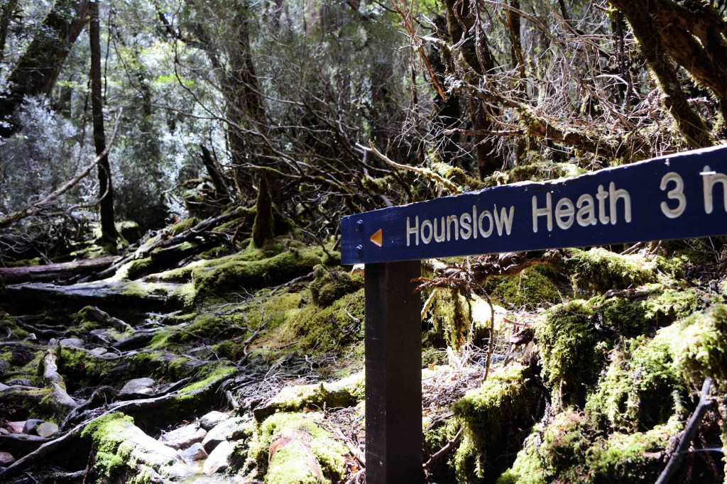 Rough 3 Hour Hike, Cradle Mountain, Tasmania