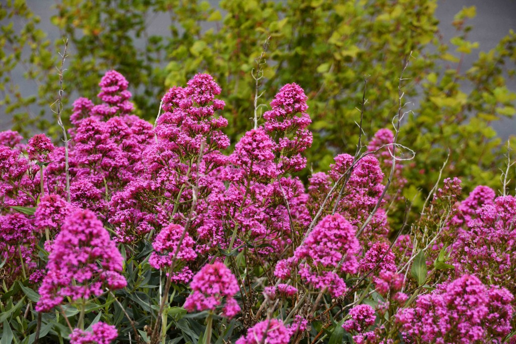 Nameless Pink Flowers