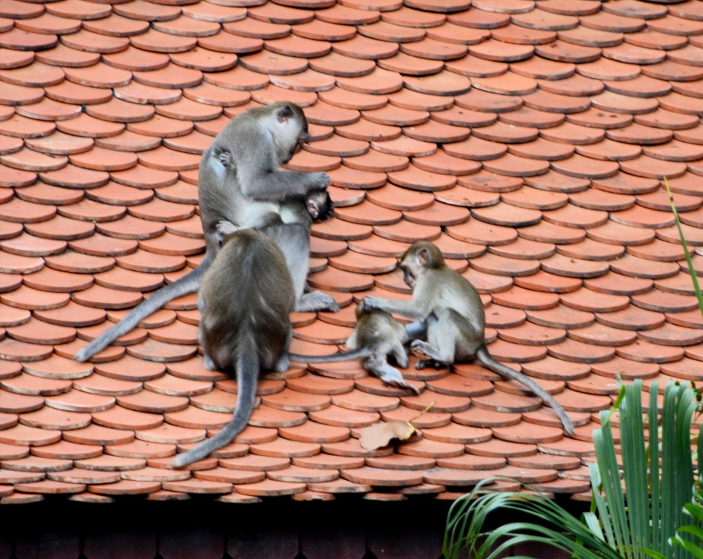 Monkey Family - Love the Sibling Bullying ;)