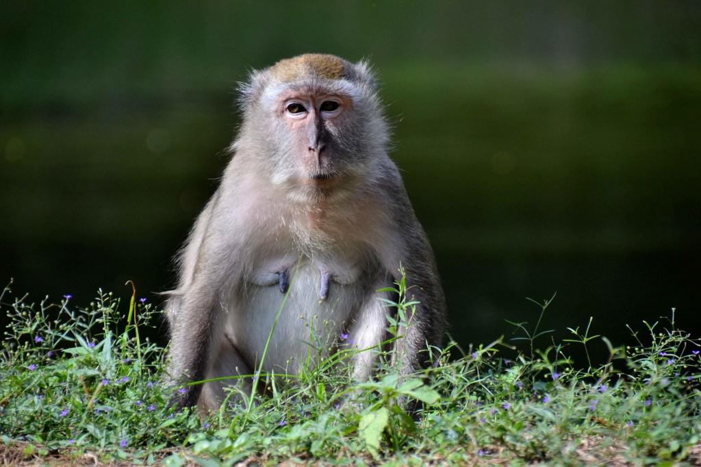 David's Fantastic Monkey Photo