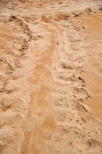 Massive Creature Sand Tracks