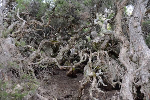 Goblin Swamp