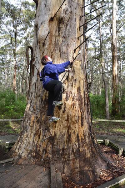 Diamond Tree Climb