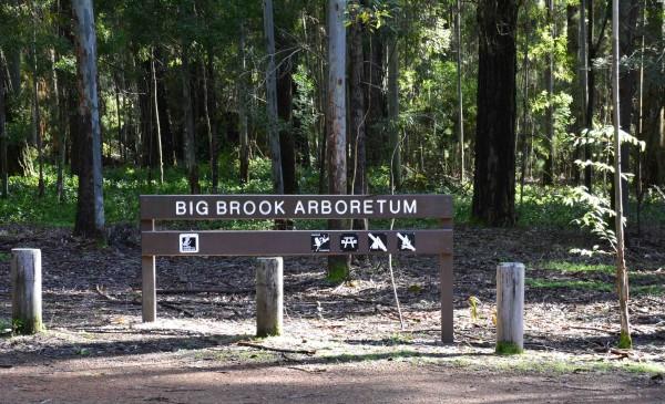 Big Brook Arboretum
