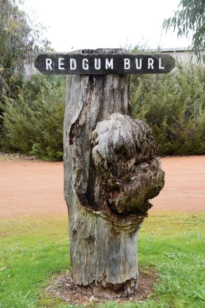 Redgum Burl