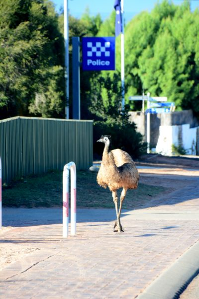 Mr Emu at the Police Station